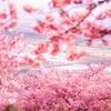 【珍道中】河津桜と菜の花!春爛漫、松田の旅~松田山のぼりはじめっ!