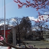 【御朱印の旅】梅の花咲く天神巡り 町田三天神巡り編
