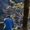 剱山の冬枯れ遊山 枯葉色