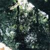 森を飛びぬけたカモ