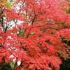 こころで感じる秋の色(木場公園)
