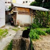 【旅行記】沖縄、ほぼ女子一人旅④(終)