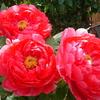 一月の花庭園