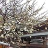 湯島天神 梅まつり特別御朱印(東京・文京区)〜連休には満開の梅と御朱印が待っている