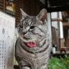 紅葉散歩2018 前編 やっぱり梅宮でネコを見てから、愛宕山に登る。ついでに望まない国際化を果たす。