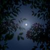 70mmで月を撮る