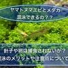 メダカとヤマトヌマエビは混泳できるのか?卵や稚魚は?混泳の注意点