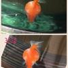 ぷりちゃんの水泡⑨