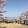 大法師公園の桜まつり