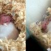赤ちゃん生後5~6日目、鳴き声とうぶ毛