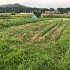 今朝は早起きして、畑の周りを草刈り