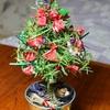 ラヴェンダークリスマス・・・ローズマリーのトピアリーを使ってクリスマス飾り