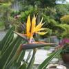 【植物や花のある生活】ビタミンF(フラワー)で心を癒そう!