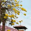 南国ムードたっぷりの花