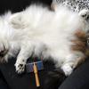 O次郎 猫毛 - 白 -