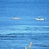 マイクロプラスチック 海洋温暖化?
