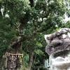 圧倒的パワーを感じる長島神社の巨大御神木 <三重県・紀北町>