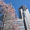 今日の景色 04/02 新宿中央公園