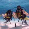 ラブラブカップルで楽しむラチャヤ島体験ダイビング!