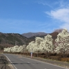 2020年3月13日(金) 現在の戸川公園の様子