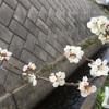 田舎暮らし、春散歩。春の花がいっぱい。