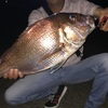 【夜釣り】堤防から真鯛の乗っ込み狙い!まだ餌で釣りますか?