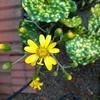 素朴だけど可愛い花