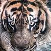 【スゴデザ】あなたの名字が動物に!WWFのキャンペーンが秀逸なポイントを考察してみた