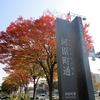 秋晴れの京都、河原町御池で御池通の紅葉を楽しむ!