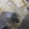 ニジイロ菌糸ビン産卵セットの様子3