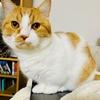 ブログ執筆中の飼い主のパソコンの上で暖をとるハイカラな愛猫。