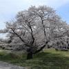 多摩川桜百景 -90. 都立武蔵野の森公園とスタジアム通り-