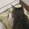 口内炎で餌を食べなくなった猫に餌を食べさせるため試行錯誤する記事