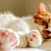 【猫学】猫の足に関するアレコレ。指の数、謎の毛、突起物などなど…