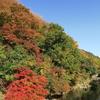 秋はカラフル~京都の里山より~