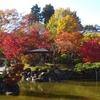紅葉狩りの季節です~群馬:桜山公園と長瀞~
