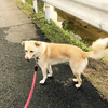 樋井川ねぎ散歩。