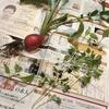 冷蔵庫に野菜がなくても家庭菜園がある