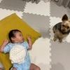 モカが赤ちゃんに嫉妬🥺