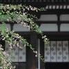 奈良の季節