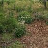 庭は草っ原みたいにしたい