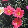 7月27日誕生日の花と花言葉
