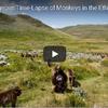 エチオピアの高原に朝日が昇り一斉に活動を始めるサルたち