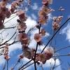 早春の植物観賞