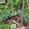 ポタジェの野菜栽培の楽しみ収穫のよろこび