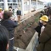 やまびこ:ブロッコリーを植えました