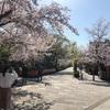 スカスカ京都の春(2)白川、高瀬川、鴨川