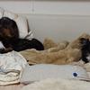 オリンピック メダルたくさん嬉しい!老犬の元気の秘密!Lot Olympic medal happy! Genki of secret old dog love life of a cat!