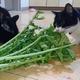今日の黒猫モモ&白黒猫ナナの動画ー831