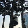 パンダがこんなところに!?東大門のとある場所にパンダが集合!可愛くておうちに連れて帰りたいんだぞ